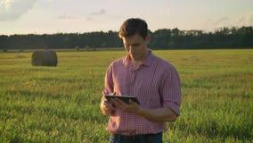 Säker lyckad man, i skjortamaskinskrivning på minnestavlan och att se omkring på sugrörfältet som står på odlingsmark under lager videofilmer