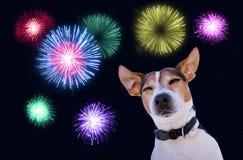 Säkerhet av husdjur under fyrverkeribegrepp Arkivbilder
