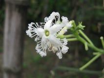 sällan blomma Arkivfoton