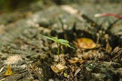 Sämlinge auf Bäumen sterben in der Natur lizenzfreies stockfoto