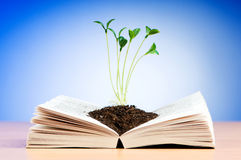 Sämlinge, die vom Buch wachsen lizenzfreies stockbild