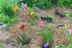 Sämlinge von den Blumen vorbereitet für das Pflanzen Lizenzfreie Stockbilder
