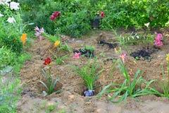 Sämlinge von den Blumen vorbereitet für das Pflanzen Stockfotografie