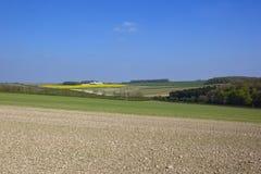 Sämlingsernten auf den szenischen Yorkshire-Wolds im Frühjahr Lizenzfreie Stockfotos
