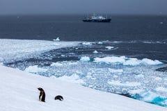 Sänd i hav- och gentoopingvin på kust Arkivbilder
