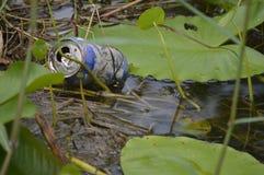 Sänfte in den Sumpfgebieten Lizenzfreie Stockfotografie