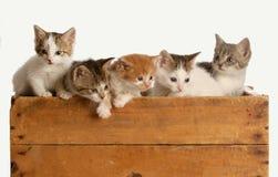 Sänfte von fünf Kätzchen stockbild