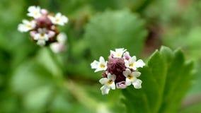 Sänften-Blume stockfoto