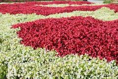 Säng av blommor Royaltyfri Bild