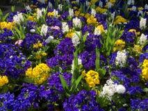 Säng av blommor i östliga Grinstead Royaltyfri Fotografi