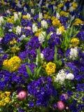 Säng av blommor i östliga Grinstead Arkivbilder