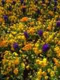 Säng av blommor i östliga Grinstead Fotografering för Bildbyråer