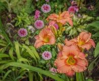 Säng av daylilies och ställa i skuggan dahlior Royaltyfria Foton