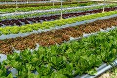 Säng av gröna grönsaker arkivbilder