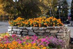 Säng med blommor i nedgången Royaltyfri Bild