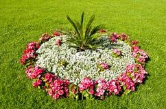 Sängar av blommor Arkivbild