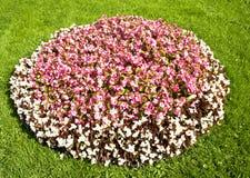 Sängar av blommor Arkivfoton