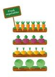Sängar med grönsaker Arkivbild