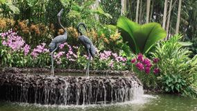 Särdrag för vattenspringbrunn stock video