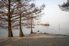 Särskilda träd på sjön i höst fotografering för bildbyråer