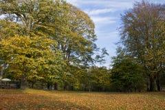 säsong för bana för höstfallskog Arkivbilder