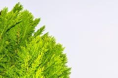 säsong för bana för höstfallskog arkivbild