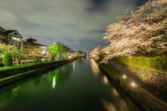 Säsong för körsbärsröd blomning för Japan ` s Arkivfoto