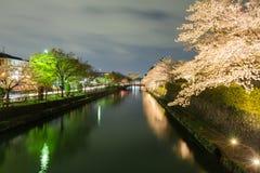 Säsong för körsbärsröd blomning för Japan ` s Fotografering för Bildbyråer