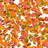 säsong för leaf för autumsammansättningsfall Arkivfoto