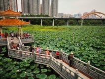 Säsong för Lotus blomma i sjön royaltyfri fotografi
