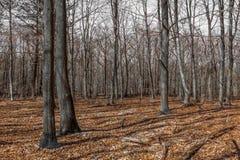 Säsong för Rambouillet skognedgång Frankrike Arkivbild