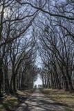 Säsong för Rambouillet skognedgång Frankrike Arkivfoton