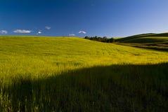 Säsong för skördar på våren, Apulia, Italien royaltyfria bilder