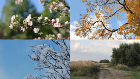 Säsonger fyra säsonger - övervintra, fjädra, sommar, höst arkivfilmer