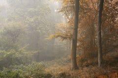 Säsonger som ändrar från sommar in i det Autumn Fall begreppet som visas i nolla royaltyfria bilder