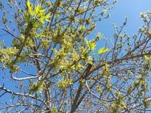 Säsonger träd, färg, himmel, blått, gräsplan, filialer, blad, vår, liv royaltyfria foton