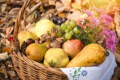 Säsongsbetonad frukt för höst, organisk frukt i vide- korg arkivbilder