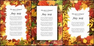 Säsongsbetonad höstbakgrund av färgrika sidor Collagesamling Arkivfoton