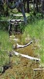 Säsongsbetonad liten vik Royaltyfri Fotografi