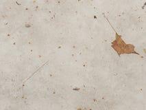Säsongsbetonad sikt av singelbruntbladet på snö Royaltyfri Fotografi