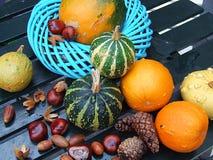 säsongsbetonade grönsaker för höst Royaltyfria Foton