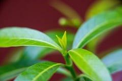 Sät grünes Sonnenlicht lizenzfreie stockfotografie