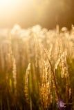 Sätta in av gräs Arkivfoton