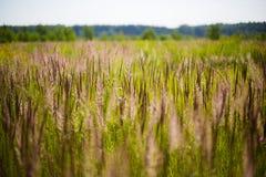 Sätta in av grönt gräs Arkivbild