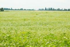 Sätta in av grönt gräs Arkivfoton