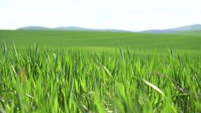 Sätta in av grönt gräs arkivfilmer