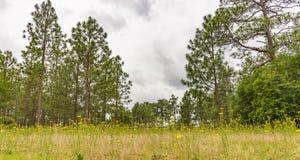 Sätta in av gula wild blommor Arkivbilder