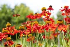 Sätta in av blommor royaltyfri bild