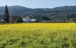 Sätta in av senap i Napa Valley Arkivfoto