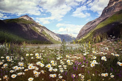Sätta in av wild blommor med steniga berg i bakgrund Fotografering för Bildbyråer